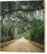 Canopy Road Wood Print
