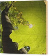Canopy View Wood Print