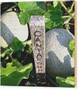 Cantaloupe Wood Print