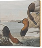Canvas Backed Duck Wood Print
