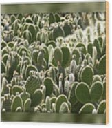 Canvas Of Cacti Wood Print