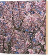 Canvas Of Pink Blossoms Wood Print