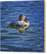 Canvasback And Blue Wood Print