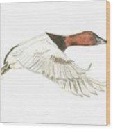 Canvasback Wood Print