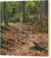 Canyon Falls Trail 1 Wood Print