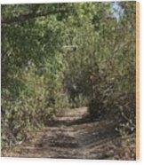 Canyon Path I Wood Print