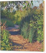 Canyon Path II Wood Print