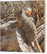 Canyon Squirrel Wood Print