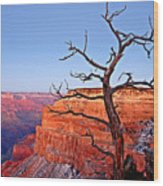 Canyon Tree Wood Print