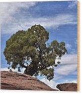 Canyonlands Tree Wood Print