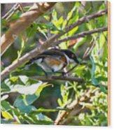 Cape Batis Wood Print