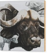 Cape Buffalo Wood Print