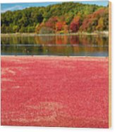 Cape Cod Cranberry Bog Wood Print