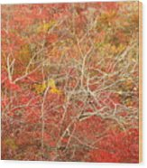 Cape Cod National Seashore Dwarf Beech Foliage Wood Print