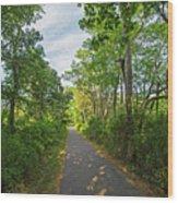 Cape Cod Rail Trail Trees Eastham Ma 2 Wood Print