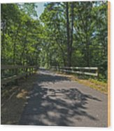 Cape Cod Rail Trail Trees Eastham Ma Fence Wood Print