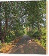 Cape Cod Rail Trail Trees Eastham Ma Wood Print
