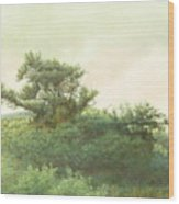 Cape Cod Scrub Wood Print