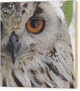 Cape Eagle-owl Wood Print
