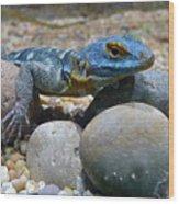 Cape Rock Lizard Wood Print