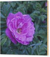 Cape Rose Wood Print