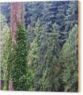 Capilano Canyon Ivy Wood Print by Will Borden