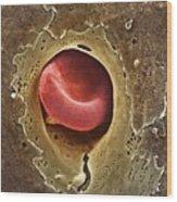 Capillary, Sem Wood Print