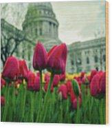 Capitol Tulips Wood Print
