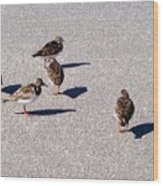 Captiva Birds 2 Wood Print