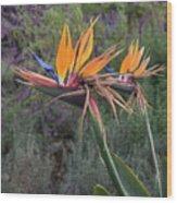 Captivating Bird Of Paradise In Full Bloom Wood Print
