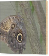 Captivating Photo Of A Brown Morpho Butterfly Wood Print