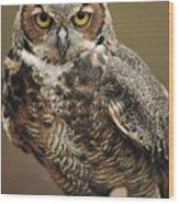 Captive Great Horned Owl, Bubo Wood Print