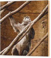 Captivity Wood Print