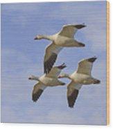 Captured Flight Of  Snow Geese Wood Print