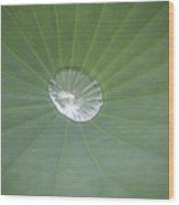 Capturing Water Wood Print