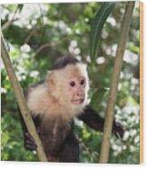 Capuchin II Wood Print