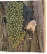 Capuchin Monkey Lunch Wood Print