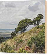 Capulin Volcano View Panorama New Mexico Wood Print