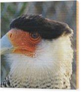 Caracara Bird Wood Print