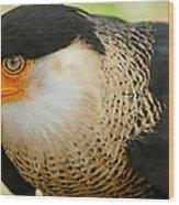 Caracara Wood Print