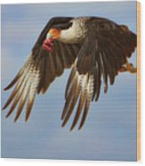 Caracara In Flight Wood Print
