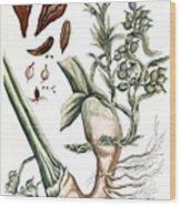 Cardamom, 1735 Wood Print