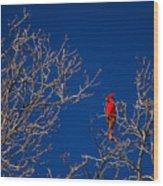 Cardinal Against Blue Sky Wood Print