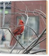 Cardinal Amid The Twigs Wood Print