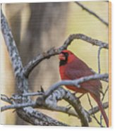Cardinal Among The Branches Wood Print
