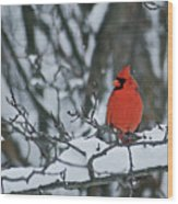 Cardinal And Snow Wood Print