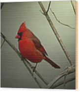 Cardinal And The Setting Sun Wood Print