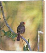 Cardinal  At Buschman Park Wood Print
