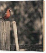 Cardinal At His Post Wood Print