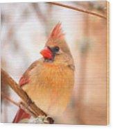 Cardinal Bird Female Wood Print